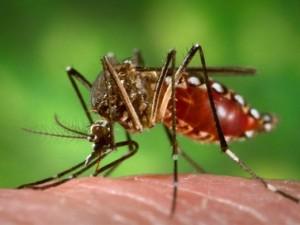 Более 20 человек в нынешнем году стали жертвами лихорадки денге в Доминиканской Республике