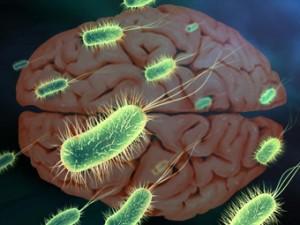Распространенность инфекций связали с умственными способностями населения