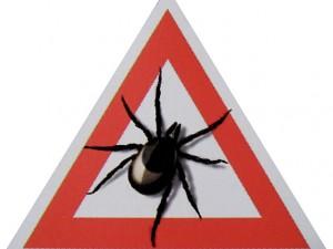 В Пензенской области зарегистрирован первый случай летального исхода от заражения клещевым вирусным энцефалитом