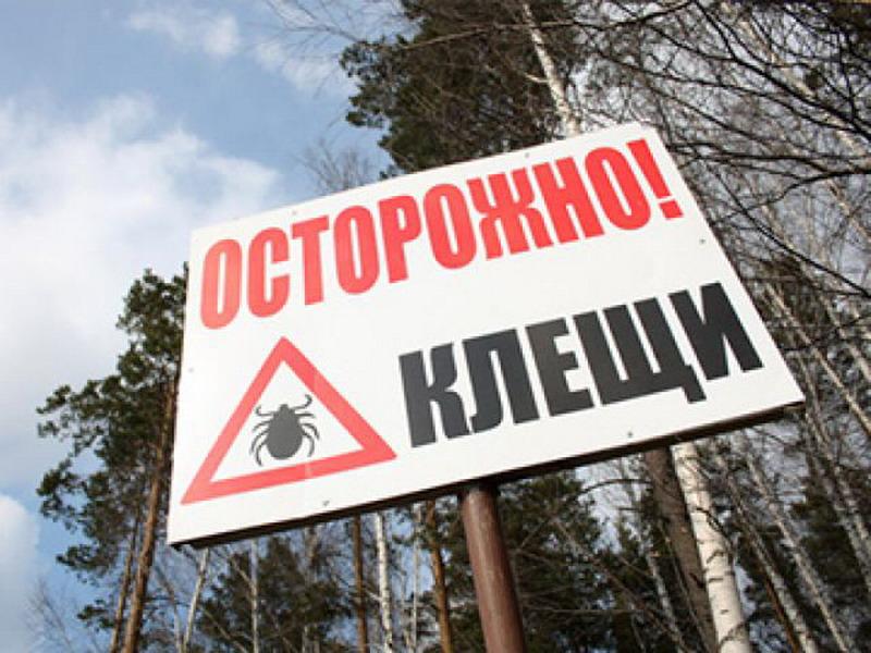 Более 13 тысяч жителей Башкирии подверглись атакам клещей, энцефалитом заболели 13 человек