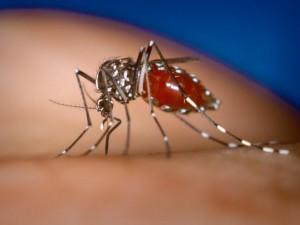 Во Франции подтверждены два случая заражения лихорадкой чикунгунья
