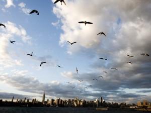 Мигрирующие птицы могут распространять трудноизлечимые инфекции