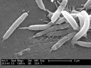 Эрадикационная терапия инфекции Helicobacter pylori