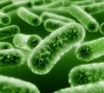 Ученые точно установили возбудителя «черной смерти» – страшной эпидемии чумы в Средневековье