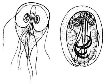 Профилактика лямблиоза