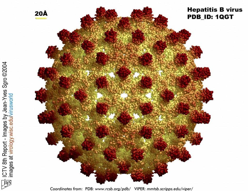 Представители общественности рекомендует правительству РФ разработать государственную программу по вирусным гепатитам