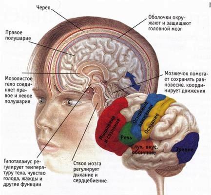 Несмотря на повреждение мозга функция рабочей памяти остается в пределах границ