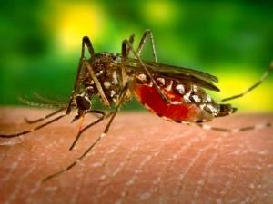 В Майами зарегистрирован первый за 50 лет случай заболевания лихорадкой Денге