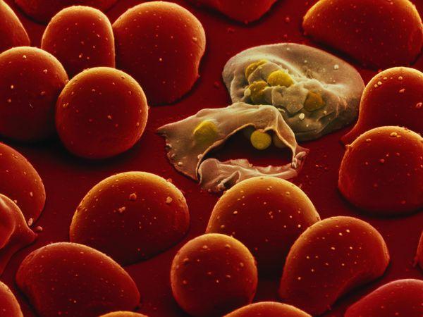 Искусственный цветок Provector, призван бороться с распространением малярии