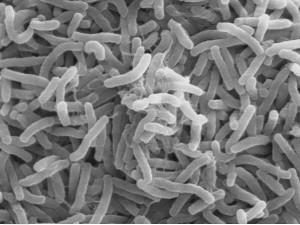В Доминиканской Республике зарегистрировано 12 случаев заболевания холерой