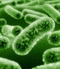 Опасные бактерии делятся своей резистентностью с соплеменниками