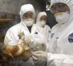 Птичий грипп напомнил о себе: массовый забой куриного поголовья