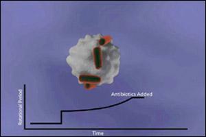 Причуды ученых: созданы весы для бактерий