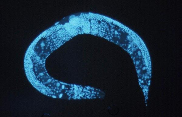 Ученые нашли новую жертву для исследования вирусов
