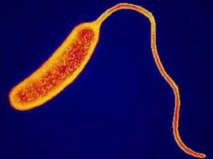 Власти Венесуэлы заявили о победе над доминиканской холерой