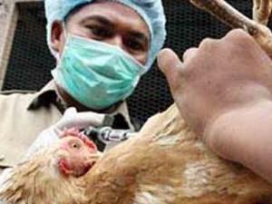 Птичий грипп выявлен еще в одном районе Японии, власти ведут уничтожение кур