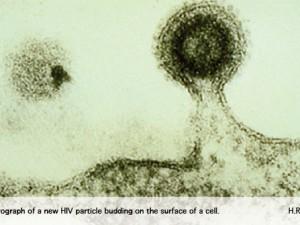Разработана новая, перспективная вакцина от ВИЧ