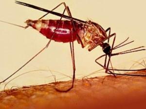 Обнаружен новый тип опасных москитов, провоцирующих малярию