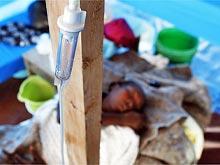 Холера на Гаити ведет себя неожиданно