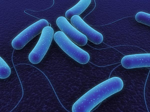 Израиль: изобретена упаковка – убийца бактерий