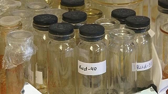 При лечении туберкулеза медики все чаще сталкиваются с резистентностью болезни к антибиотикам