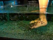 Модный «рыбий педикюр» грозит инфекциями и опасными заболеваниями