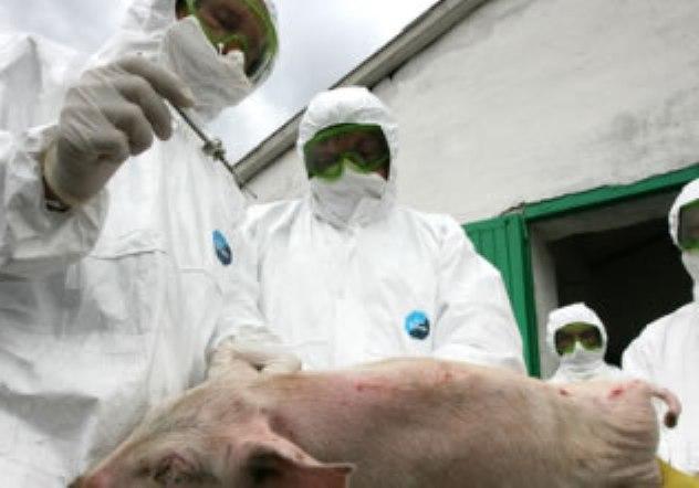 Евросоюз закрыл импорт российской свинины из-за угрозы чумы свиней