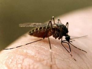 Чем опасны комары и способы защиты от них