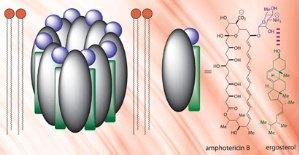 Как работает противогрибковый препарат