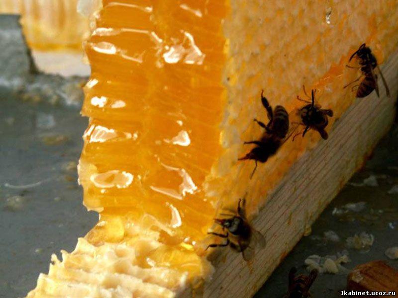Австралийский мед обладает мощными антибактериальными свойствами