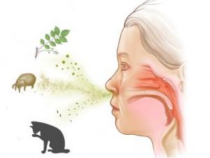 Частота встречаемости экссудативного среднего отита с аллергическим ринитом у детей