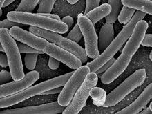 Опасная бактерия отправила в больницу более 130 немцев и унесла жизни двоих человек