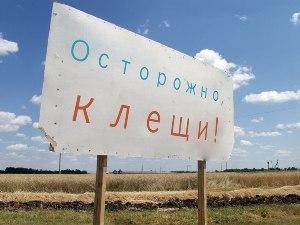В Калининграде растет число заболевших клещевым энцефалитом