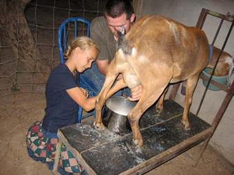 Калининградский ребенок заразился энцефалитом от козьего молока