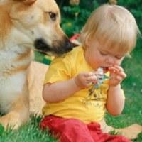 Аллергию на животных можно сократить вдвое с помощью  домашних любимцев