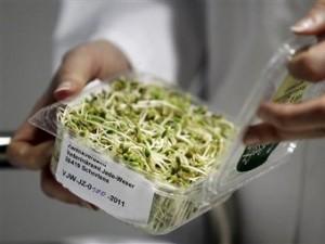 Немецкие эксперты не нашли в сое источника кишечной инфекции