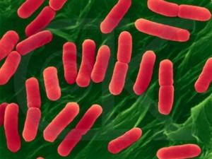Будьте бдительны: кишечная инфекция чрезвычайно опасна