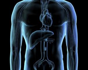 Гепатит А — болезнь  с негативными последствиями для организма