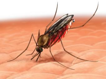 Эксперты усомнились в эффективности новой вакцины от малярии