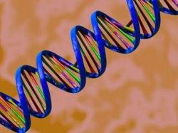 Найден ген — причина болезни Кавасаки