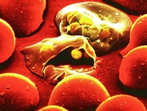 Малярия вернулась в Европу