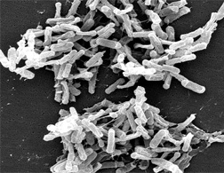 В Европе одобрен препарат Дификлир для лечения кишечной инфекции, вызванной клостридиями