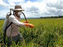 Пестициды вызывают инфекции легких у детей, выяснили ученые