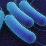 Разработан принципиально новый способ борьбы с супербактериями