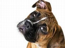 Домашние собаки и кошки избавляют детей от инфекций
