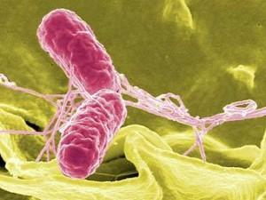 Семеро екатеринбуржцев заразились сальмонеллезом после обеда в ресторане