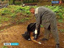В поселении на территории «Новой Москвы» установлен карантин в связи с бешенством