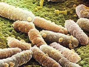Десяток детей из Приамурья прямо в больнице заразились кишечной инфекцией