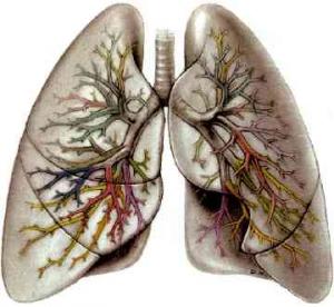 14 ноября — Всемирный день борьбы против хронической обструктивной болезни легких