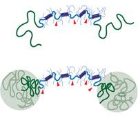 Новые инъецируемые псевдопластичные гели твердеют после попадания в организм